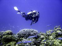 marsa-alam-2008-onderwater-1078