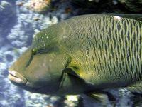 marsa-alam-2008-onderwater-2024